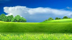 beautiful nature background video
