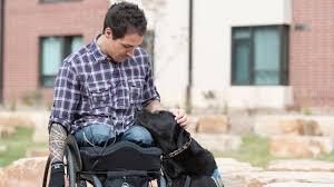 paraplegic veterinary student