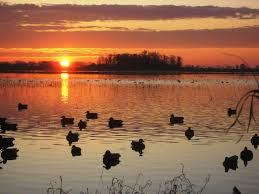 duck hunting backgrounds for puter