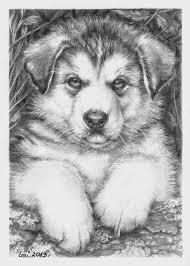 Husky Puppy Dieren Tekenen Kleurplaten Honden