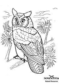 Kleurplaten Volwassenen Vogels Google Zoeken Dieren