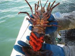 Forest Life : The Lobsters