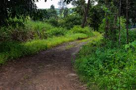 indian forest photos royalty free