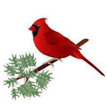 Male Cardinal Wall Decal By Wallmonkeys Peel And Stick Graphic 18 In W X 15 In H Wm3197 Walmart Com Walmart Com