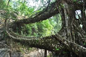 Road Less Travelled: Double Decker Root Bridge A Living Legend!
