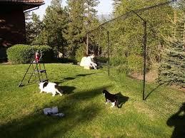 Purr Fect Fence Photo Gallery Cat Fence Cat Enclosure Pets