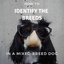 breeds in a mixed breed dog