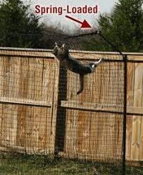 60 Cat Fence Ideas In 2020 Cat Fence Cat Enclosure Outdoor Cat Enclosure