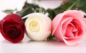 صور ورد روعة سحر الورد والوانه اثارة مثيرة
