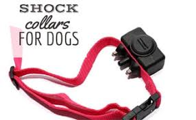 8 Things To Know Before Buying A Shock Collar Caninejournal Com