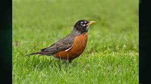 Bird Notes With Audubon Vermont S Mark Labarr Audubon Vermont