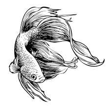 fighting fish stock vectors royalty
