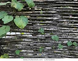 Woven Wooden Fence Thin Twigs Green Stock Photo Edit Now 1183324849
