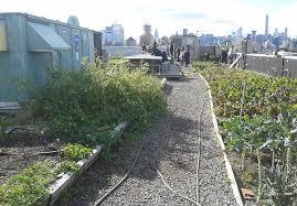 largest rooftop vegetable garden