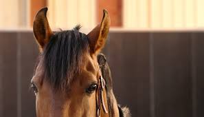 rarest horse breeds in the world