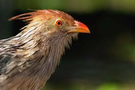 Image result for burung membantu burung lain yang buta