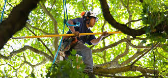 Looking For The Best-'est Tree Services in Vallejo? We Are There ...