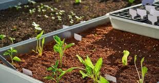 raised bed soil make the best soil for