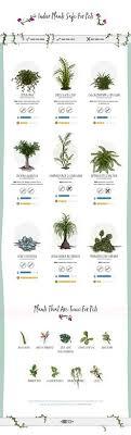 19 best pet friendly indoor plants