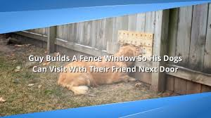 Man Builds A Fence Window So His Dogs Can Say Hello To Their Dog Neighbors Youtube