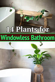 14 plants for windowless bathroom in