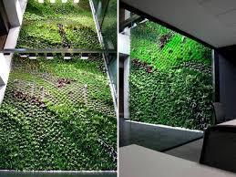vertical garden cleans indoor office air