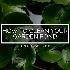 how to clean a garden pond pond