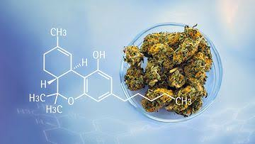 Image result for Cannabis Testing