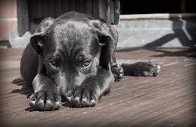 how to cut dog nails and how to stop