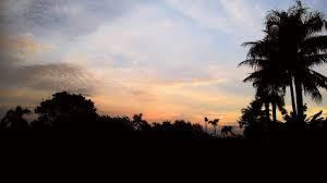 pemandangan pagi hari pemandangan alam kucing lucu