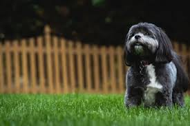 Dog Proof Fencing How To Create A Dog Friendly Garden