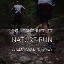 inspiring walt disney quotes inspirationfeed