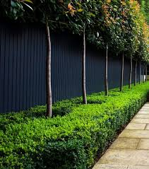 fences disappear with this surprising color