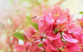most beautiful flower wallpapers world