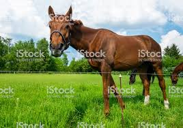 Electric Fence On The Horse Paddock Stock Photo Download Image Now Istock