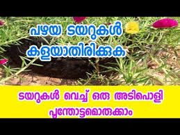 gardening ideas for home in malayalam