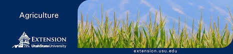 Considerations for Crop Rotation from Alfalfa to Corn