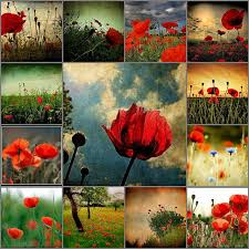 of remembrance day remembrance day art