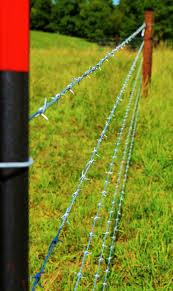 Usda Funding Helps Cattle Farm Business Agupdate Com