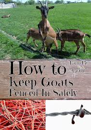 How To Keep Goats Fenced In Farm Fit Living