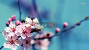 صور زهور على الاغصان ليدي بيرد