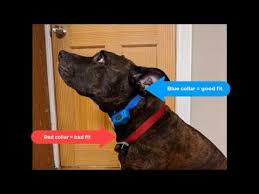Invisible Fence Brand Collar Fit Instructions Youtube