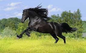 ننشر أجمل صور الخيول العربية 10 علامات تدل علي الجمال