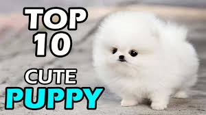 top 10 cute puppy breeds you