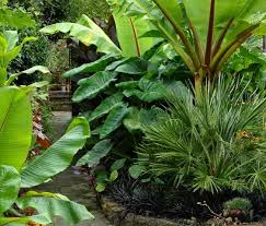 good tropical garden plants tropical