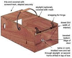 make a simple humane squirrel trap