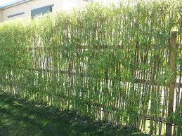 Living Willow Hedge Natural Fence Living Willow Fence Willow Fence