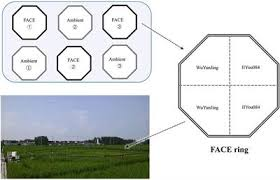 Frontiers | Divergent Responses of the Diazotrophic Microbiome to Elevated  CO2 in Two Rice Cultivars | Microbiology