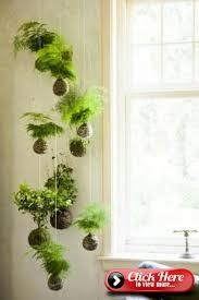 hanging indoor plants and balcony