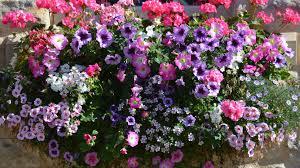 Flowering Window Box Ideas That Work For Sunny Gardens